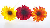 Artificial flowers lined up — Stock Photo