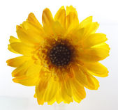 Artificial flower - single yellow — Stock Photo