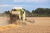 Combine harvestor working in field — Stock Photo