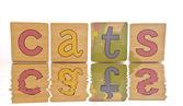 Piastrelle in legno - gatti di ortografia — Foto Stock