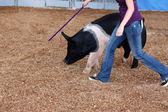 Addestramento animali — Foto Stock