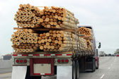 Truck Transporting Wood — Stock Photo