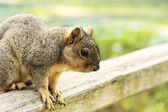 Squirrel on the Bench — Stock Photo