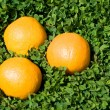 Orange on the green grass — Stock Photo