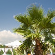 Palm tree against the blue sky and umbrellas — Stock Photo