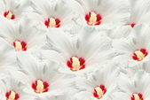 Many white flower — Stock Photo