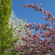 Trees in bloom — Stock Photo
