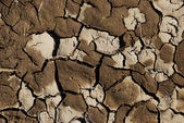 Closeup of a dry and cracked patch of earth — Stock Photo