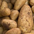 Potatos — Stock Photo