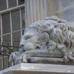 Sleeping lion — Stock Photo #3268841