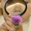 Child is looking at flower — Stock Photo #3088900