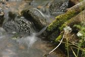 Small stream in the fores — Stock Photo