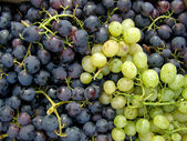 Mixed grapes — Stock Photo