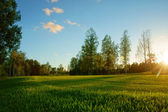 Meadow in the forest at sunset — Stock Photo