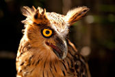 Owl from with opened beak and yellow eye — Stock Photo