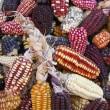 Peruvian Corn on a market stall — Stock Photo