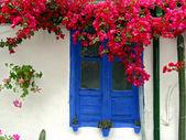 Window in bloom — Stock Photo