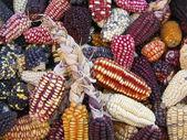 Peruvian Corn on a market stall — Stock Photo