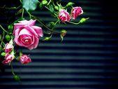 Rose before lamellar blind — Stock Photo