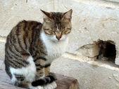 Katt och mousehole — Stockfoto