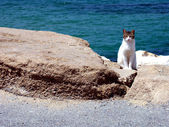 Cat by the sea — Stock Photo