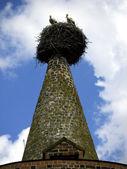 Steepletop com cegonhas em ziesar — Fotografia Stock