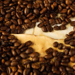 Coffee beans on old paper — Stock Photo #3116928