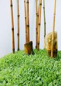 Bambú mini — Foto de Stock