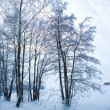 Beautiful winter scene — Stock Photo