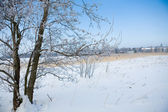 Beautiful winter scene — Stock Photo