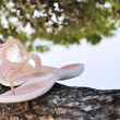 Pink slippers on pine tree — Stock Photo