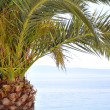 Palm tree at the beach — Stock Photo