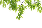 Spring nature green leaf background — Stock Photo