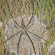 Stock Photo: Animal spider isolated
