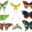 Butterfly moth collection — ストック写真