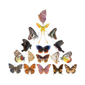 Butterfly pyramid collection — Stock Photo