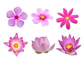 Pink flower collection — Stock Photo