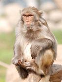 Animal monkey — Stock Photo