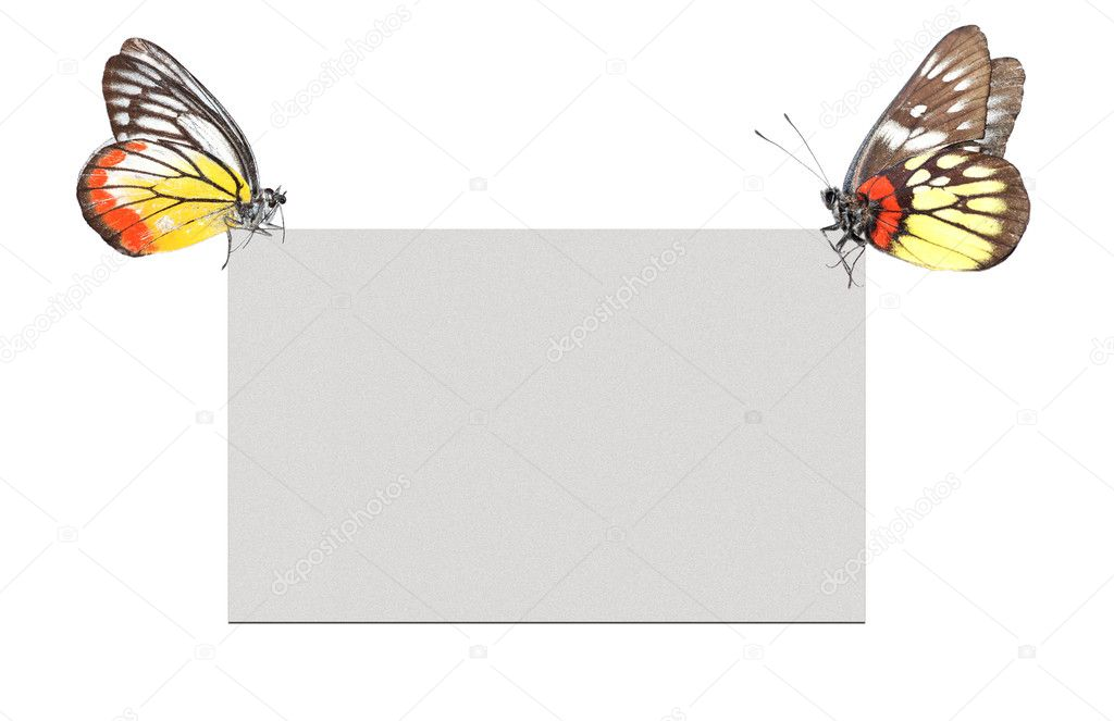 Butterfly blank poster frame background — Stock Photo #3136091