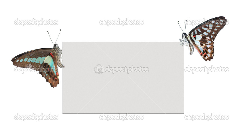 Butterfly blank poster frame background — Stock Photo #3136099