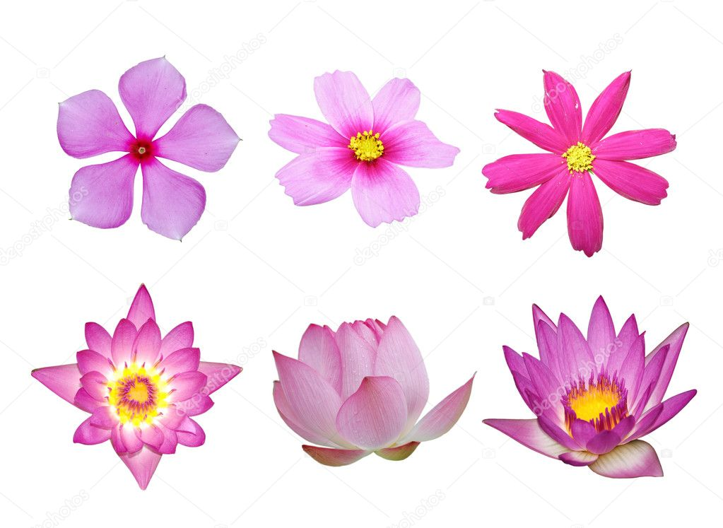Pink flower collection isolated in white background  Stock Photo #3136641