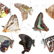 Stock Photo: Butterfly collection side view