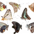 Butterfly collection side view — Stock Photo #3155832