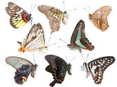 Butterfly collection side view — Stock Photo