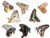 蝴蝶集合侧视图 — 图库照片