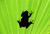 Frog on palm leaf — Stock Photo