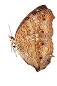 Butterfly set — Stock Photo