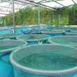 Agriculture aquaculture farm - Stock Photo