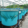 Agriculture aquaculture farm — Stock Photo