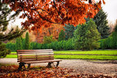 Beautiful brown bench in autumn park under red tree — Stock Photo
